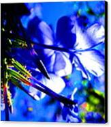 Blue Plumbago Flowers Canvas Print by Catherine Natalia  Roche