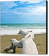 Blue Sea And Sky With Log On The Beach Canvas Print