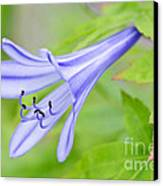 Blue Trumpet Canvas Print by David Lade