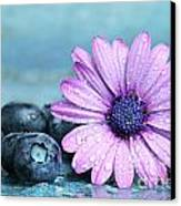Blueberries And Daisy Canvas Print by Sandra Cunningham