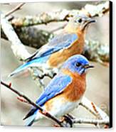 Bluebird Couple Canvas Print
