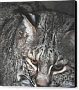 Bobcat Love Canvas Print by DiDi Higginbotham