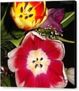 Bold Color Flowers Canvas Print by Jose Lopez