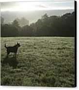 Bolinas, California, United States Dog Canvas Print by Keenpress
