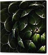 Bolivian Plant In Late Afternoon Light Canvas Print by Robert Postma