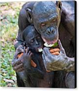 Bonobo 3 Canvas Print