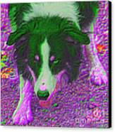 Border Collie Stare In Colors Canvas Print by Smilin Eyes  Treasures