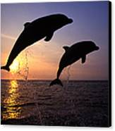 Bottlenose Dolphins Canvas Print by Francois Gohier and Photo Researchers