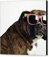 Boxer Wearing Sunglasses Canvas Print