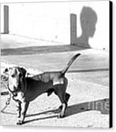 Boy Meets Dog Canvas Print by Joe Jake Pratt