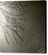 Branches In The Fog Canvas Print by Susan Isakson