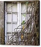 Branchy Window Canvas Print