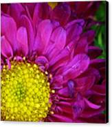'bright Beauty' Canvas Print by Tanya Jacobson-Smith