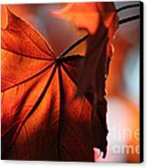 Brilliant Bronze Maple Leaf Canvas Print by Chris Hill
