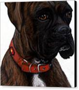 Brindle Boxer Canvas Print by Michelle Harrington