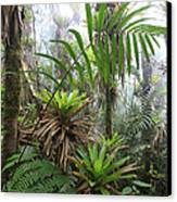 Bromeliads And Tree Ferns  Canvas Print by Cyril Ruoso