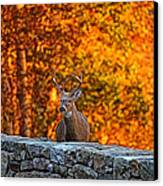 Buck Digital Painting - 01 Canvas Print by Metro DC Photography