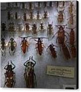 Bug Collector - So What's Bugging You Canvas Print by Mike Savad