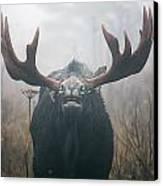 Bull Moose Testing Air For Pheromones Canvas Print