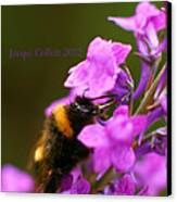 Bumble Canvas Print by Jacqui Collett