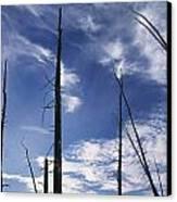 Burnt Trunks Of Black Spruce, Boggy Canvas Print by Darwin Wiggett
