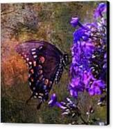 Busy Spicebush Butterfly Canvas Print by J Larry Walker