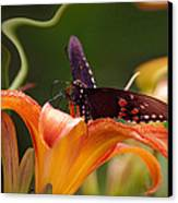 Butterflies Are Free... Canvas Print by Arthur Miller