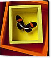 Butterfly In Box Canvas Print by Garry Gay
