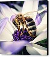 Buzz Wee Bees Canvas Print by Lessie Heape