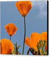 California Poppies Canvas Print by Denice Breaux