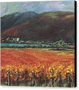 Calistoga Vineyard In Napa Valley By Deirdre Shibano Canvas Print