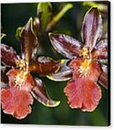 Cambria Orchid Flowers Canvas Print by Dr Keith Wheeler
