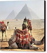 Camel And Pyramids, Caro, Egypt. Canvas Print