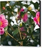 Camellia Flower (camelia Japonica) Canvas Print by Dr Keith Wheeler