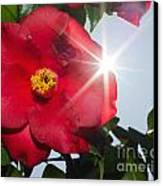 Camellia Flower Canvas Print by Mats Silvan