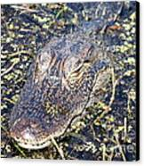 Camouflaged Gator Canvas Print by Carol Groenen