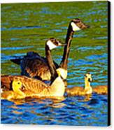 Canada Geese Family Canvas Print by Paul Ge