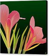 Canna Lilly Whimsy Canvas Print by Rand Herron