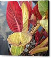 Canna Lily Fall Colors Canvas Print