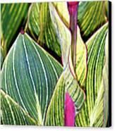 Canna Lily Foliage Canvas Print