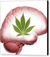 Cannabis Use, Artwork Canvas Print by Victor De Schwanberg