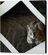 Cat In A Frame Canvas Print