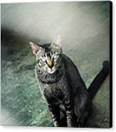 Cat Sitting On Floor Canvas Print by Raj's Photography