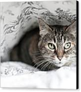 Cat Under In Blankets Canvas Print