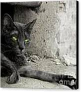 cat Canvas Print by Zuzanna Nasidlak
