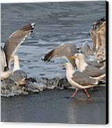 Catch Me If You Can  Canvas Print by Debra  Miller