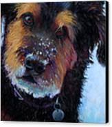 Catching Snowballs Canvas Print by Billie Colson