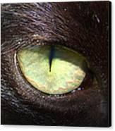 Cat's Eye Canvas Print by Shannon Blanchard