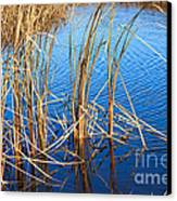 Cattail Reeds Canvas Print by Ms Judi