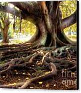 Centenarian Tree Canvas Print